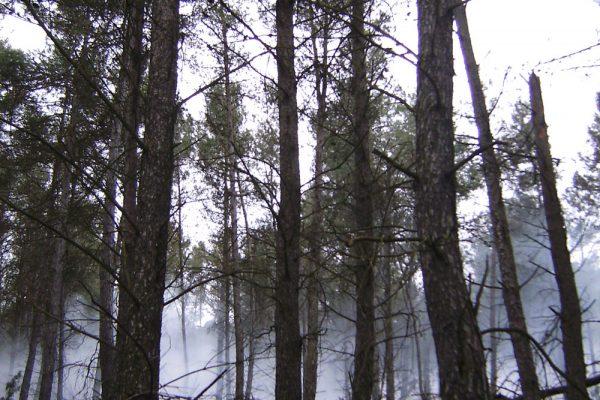 niebla-bosque